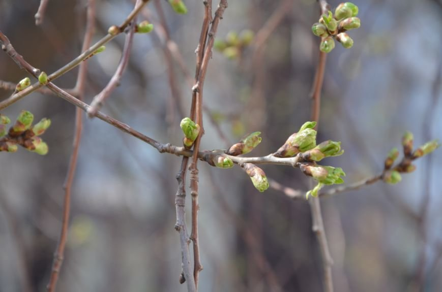 Запах весны, фото-10