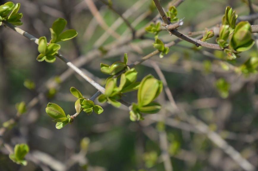 Запах весны, фото-28
