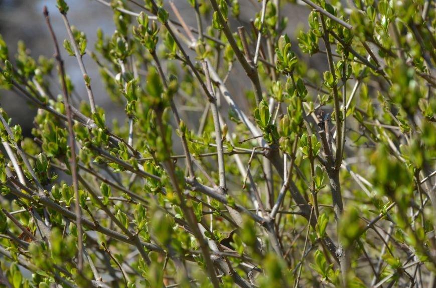 Запах весны, фото-26