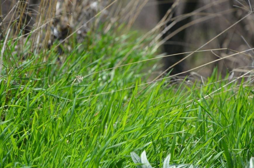 Запах весны, фото-29