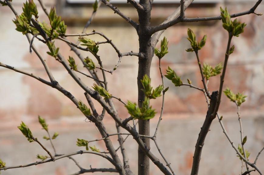 Запах весны, фото-2