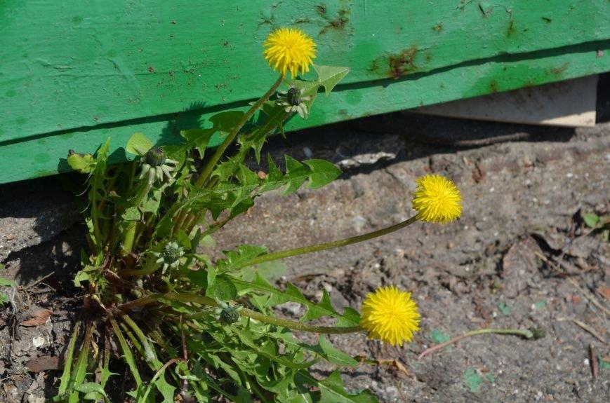 Запах весны, фото-14