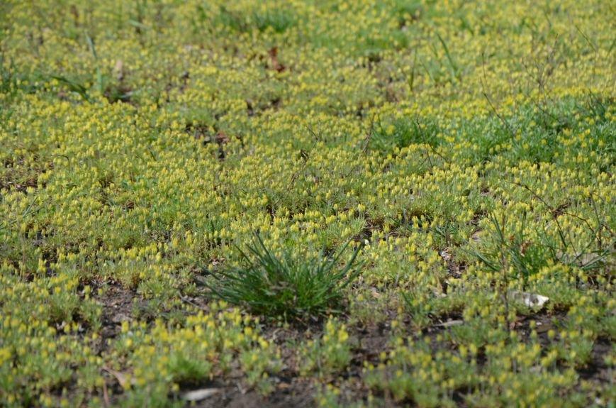 Запах весны, фото-19