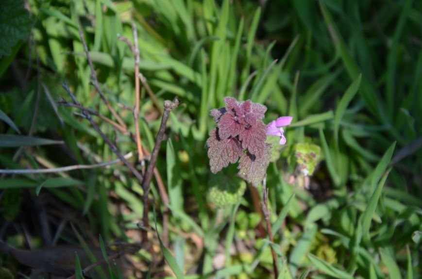 Запах весны, фото-30