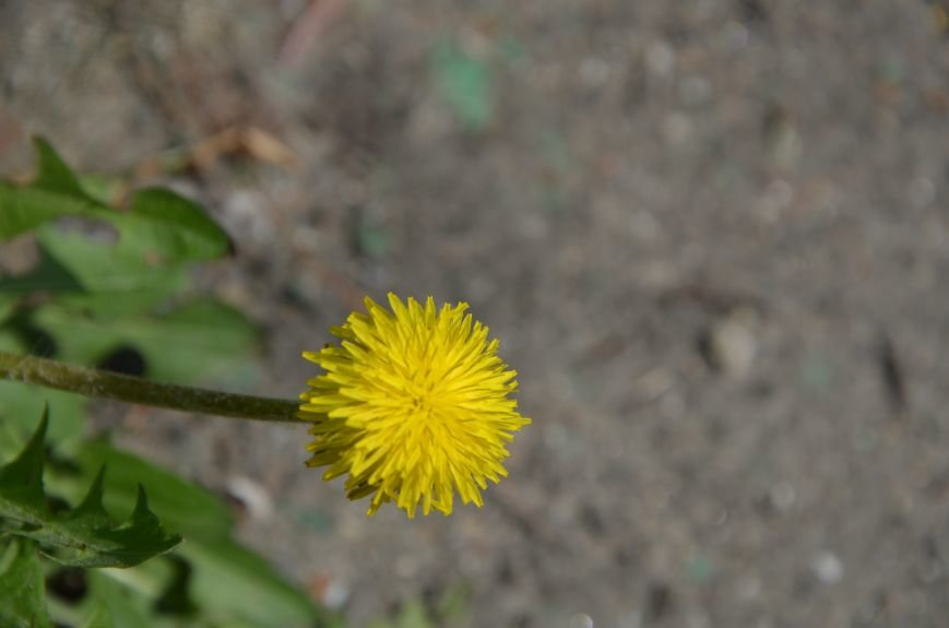 Запах весны, фото-8