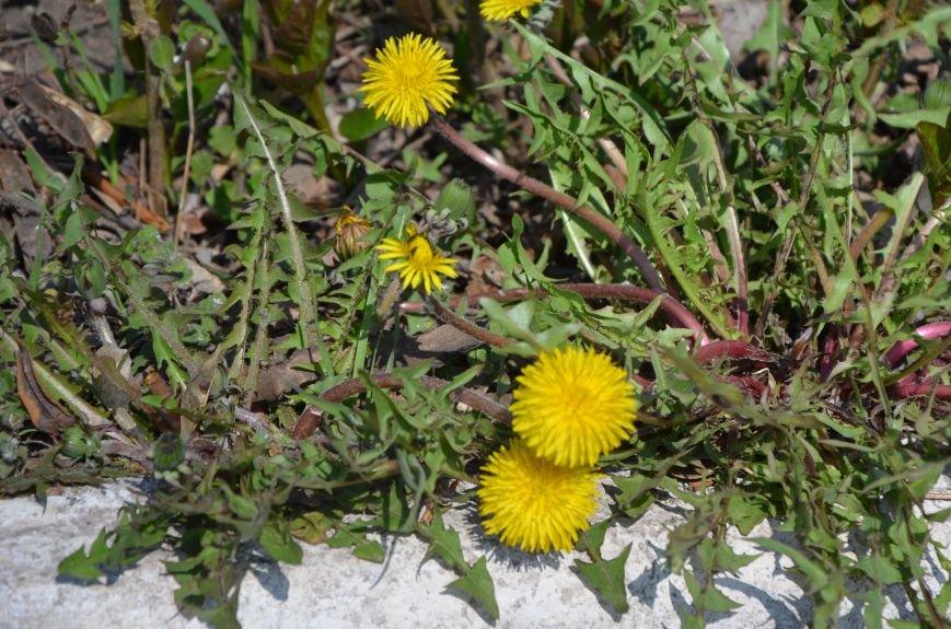 Запах весны, фото-27