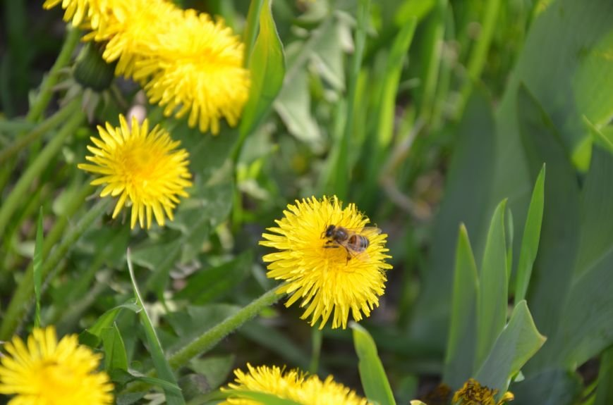 Запах весны, фото-15