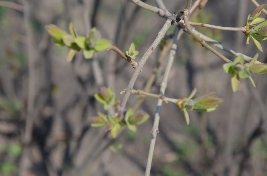 Запах весны, фото-21