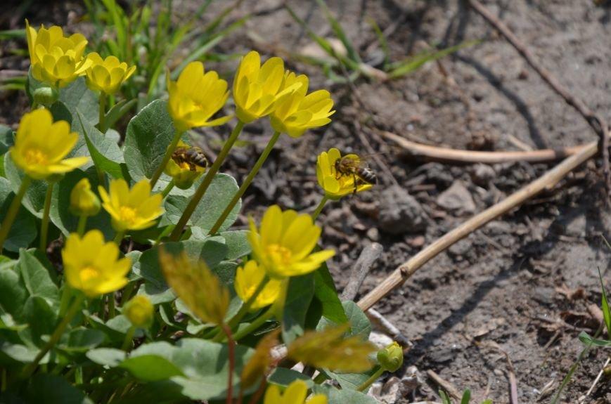 Запах весны, фото-5