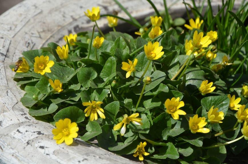 Запах весны, фото-9
