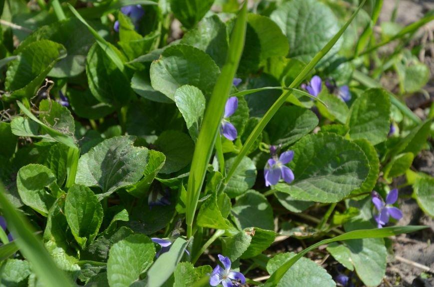 Запах весны, фото-3
