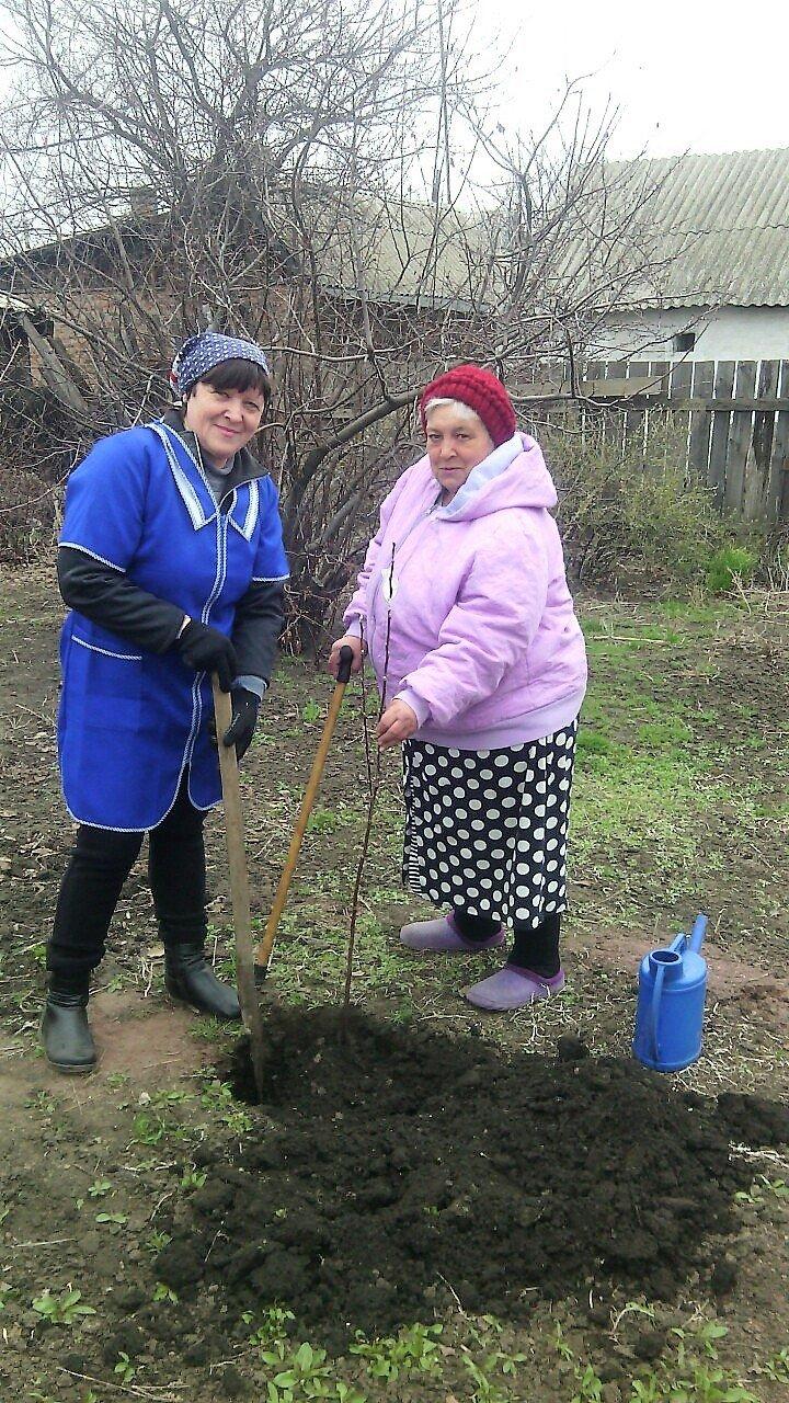 Пожилые новошахтинцы приняли участие в Дне древонасаждения, фото-1