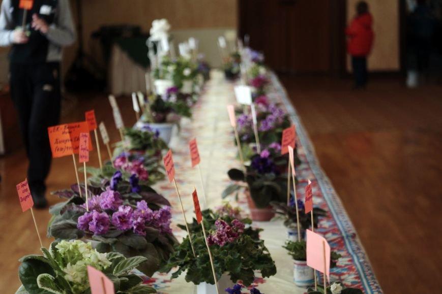 Торжественное открытие выставки «Таємне життя фіалок» в Никополе, фото-4
