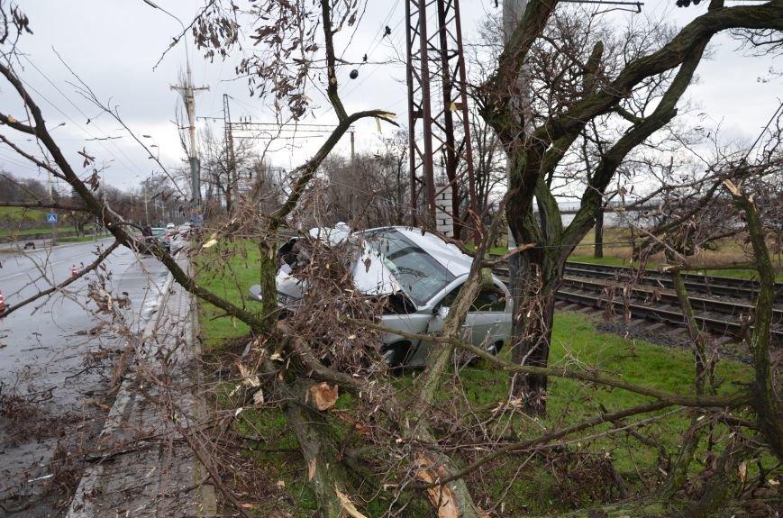 """В Мариуполе автомобиль """"Джили"""" снес дерево (ФОТО+ВИДЕО), фото-5"""