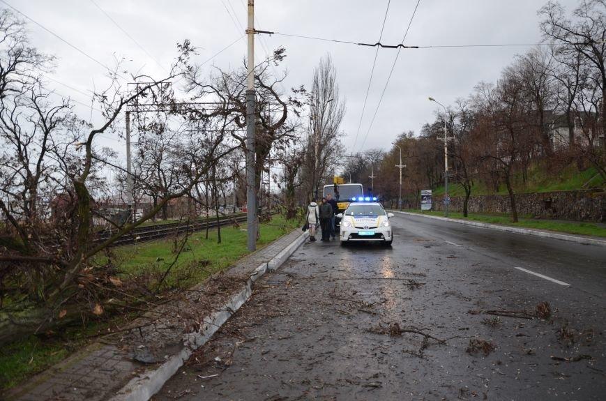 """В Мариуполе автомобиль """"Джили"""" снес дерево (ФОТО+ВИДЕО), фото-2"""