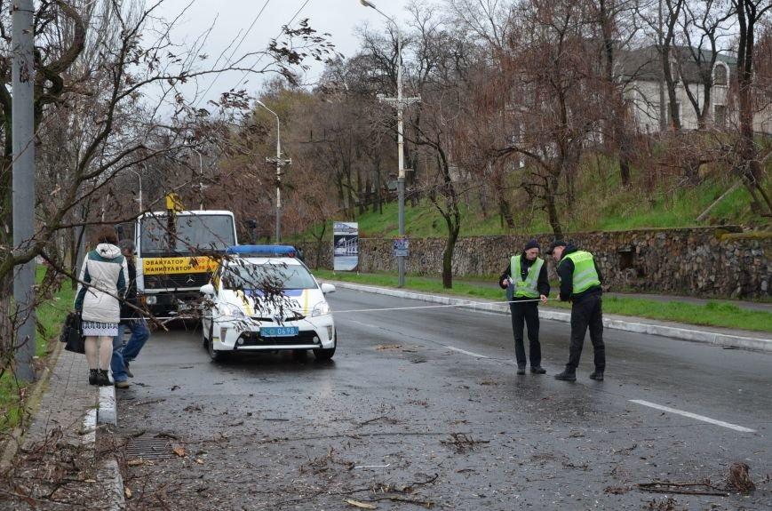 """В Мариуполе автомобиль """"Джили"""" снес дерево (ФОТО+ВИДЕО), фото-12"""