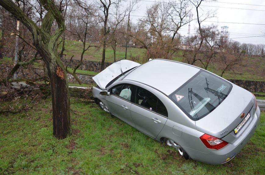 """В Мариуполе автомобиль """"Джили"""" снес дерево (ФОТО+ВИДЕО), фото-7"""