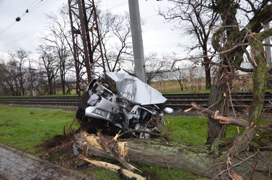 """В Мариуполе автомобиль """"Джили"""" снес дерево (ФОТО+ВИДЕО), фото-3"""