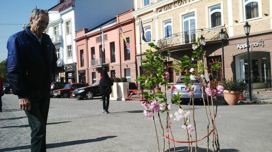 У центрі Ужгорода вчитель-інженер продає сакури за 150 гривень: фото, фото-1