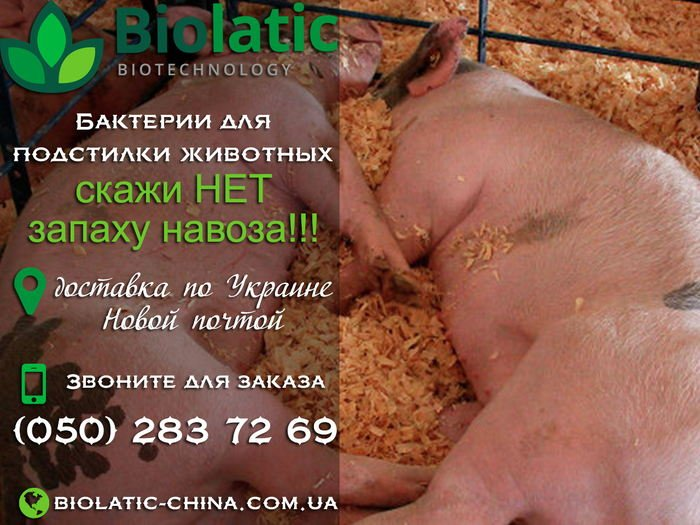 Бактерии для подстилки свиней. Где купить в Украине, фото-1