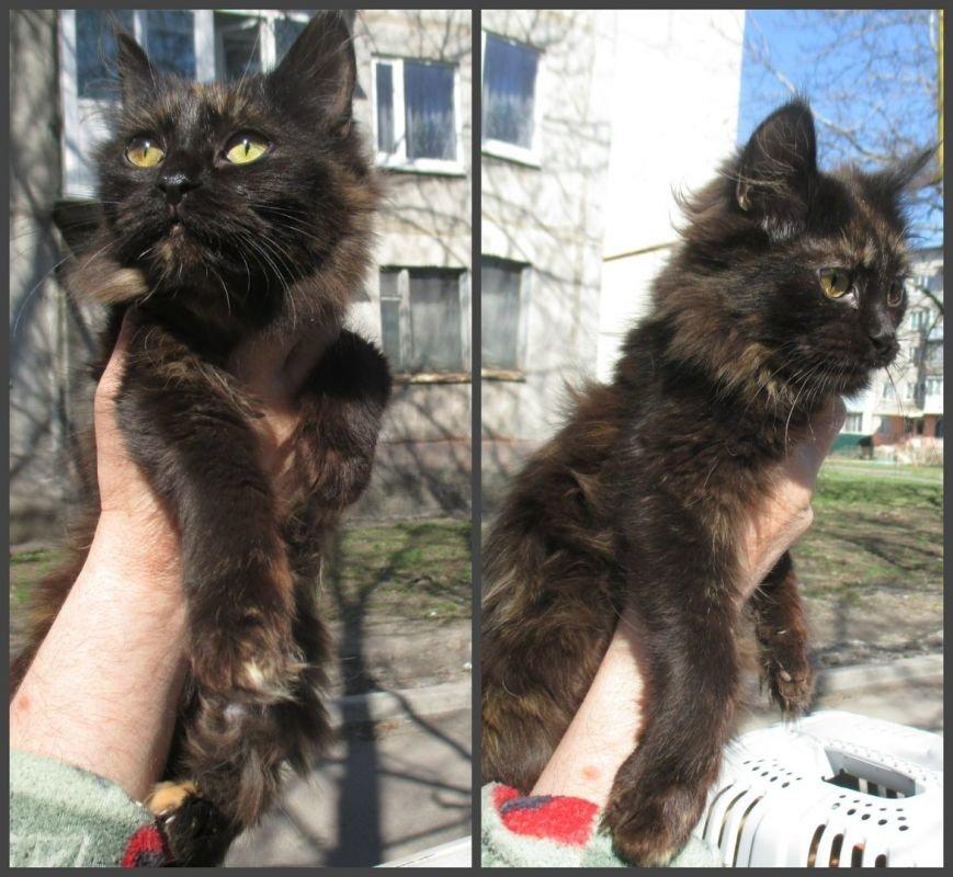 Они ищут хозяев: свежая подборка покровских котят, которые ищут дом, - ФОТО, фото-5