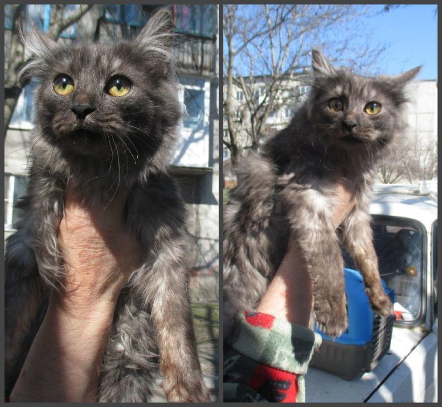 Они ищут хозяев: свежая подборка покровских котят, которые ищут дом, - ФОТО, фото-1