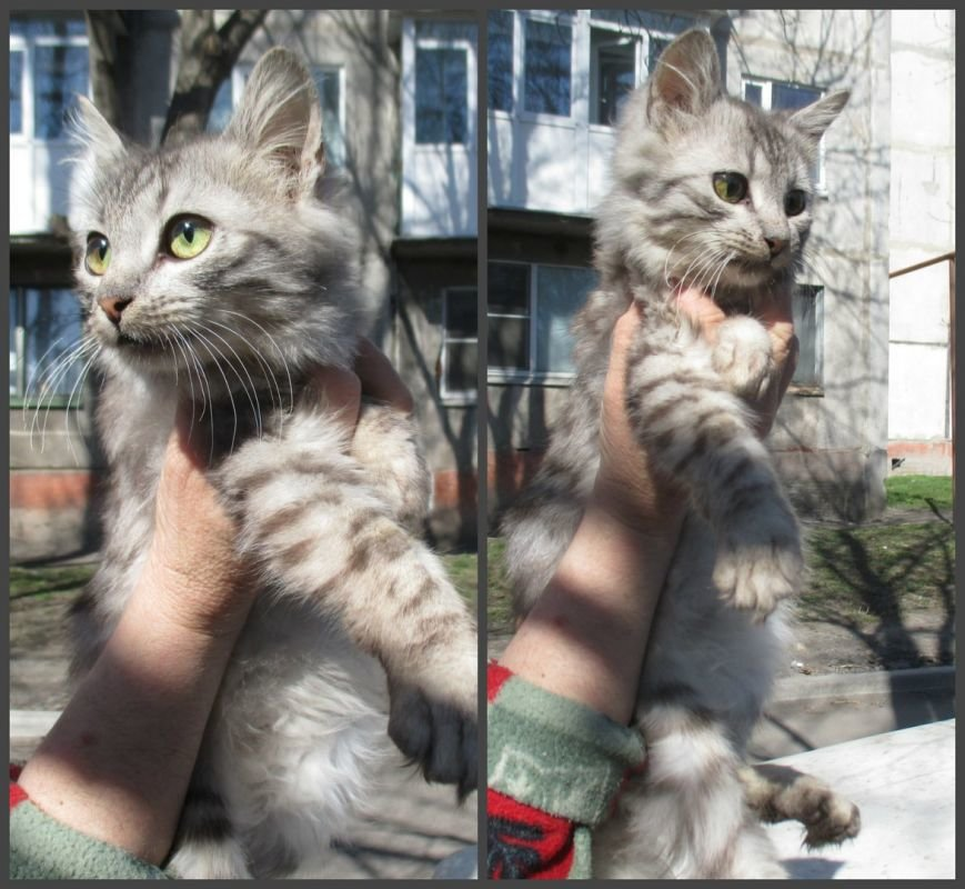 Они ищут хозяев: свежая подборка покровских котят, которые ищут дом, - ФОТО, фото-4