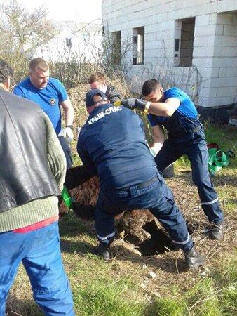 В Крыму спасатели вызволили из ловушки несчастного осла (ФОТО), фото-3