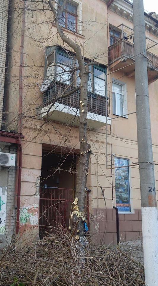 """Херсонцы жалуются на то, что в центре """"цинично изуродовали деревья"""" (фото), фото-1"""