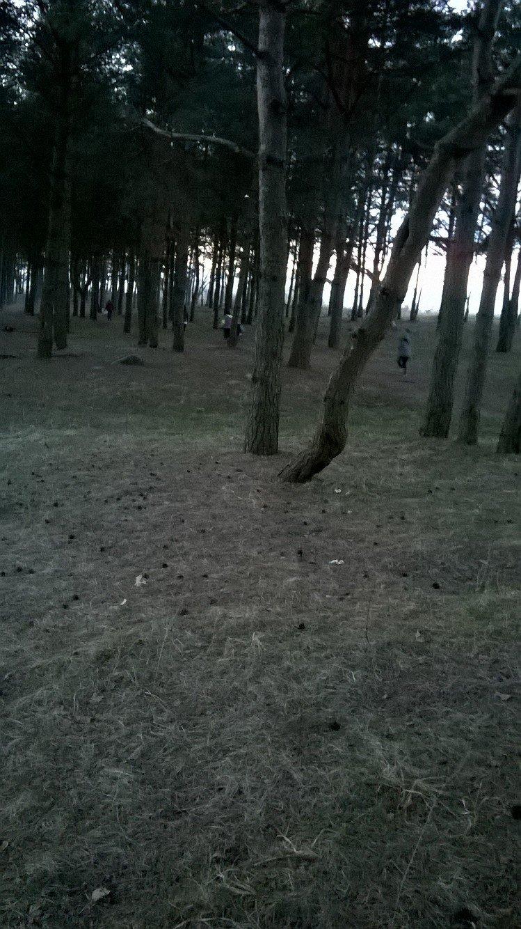 «Хороший пример людям». Полочане по личной инициативе убрали лесок в районе Аэродрома. ФОТО, фото-7