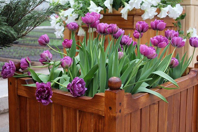 «Вандалы — наша головная боль». «Белгорблагоустройство» готовится к весенней высадке цветов, фото-5