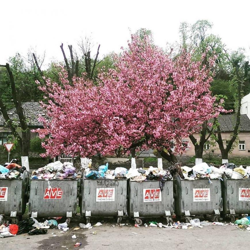 """Сакура та 4 смітники поблизу - в Ужгороді на Підградській з'явилась """"туристична родзинка"""": фото, фото-2"""