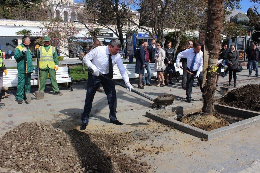 Руководители города пополнили аллею пальм (6)