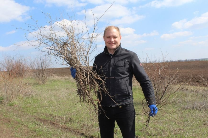 В посёлке Шевченко сегодня высажено около 3,5 тыс. саженцев лещины, фото-2
