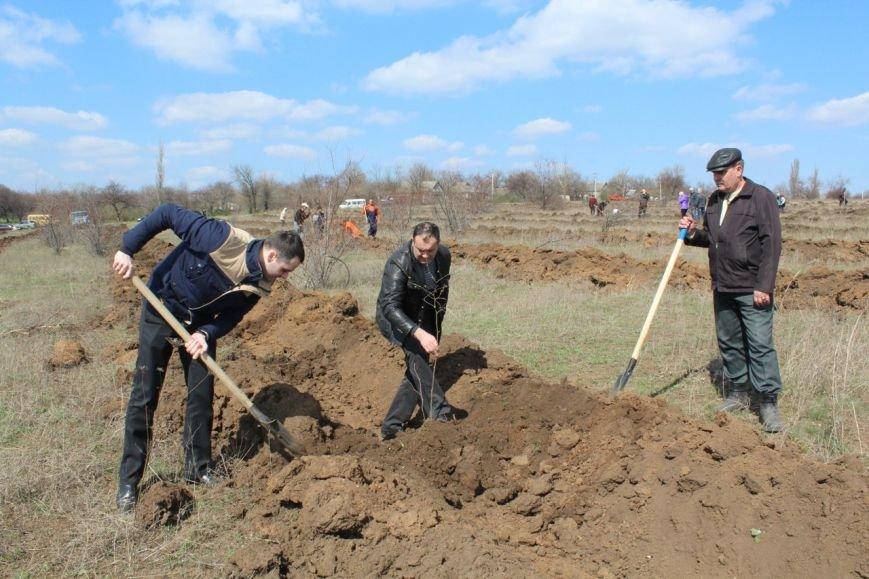 В посёлке Шевченко сегодня высажено около 3,5 тыс. саженцев лещины, фото-1
