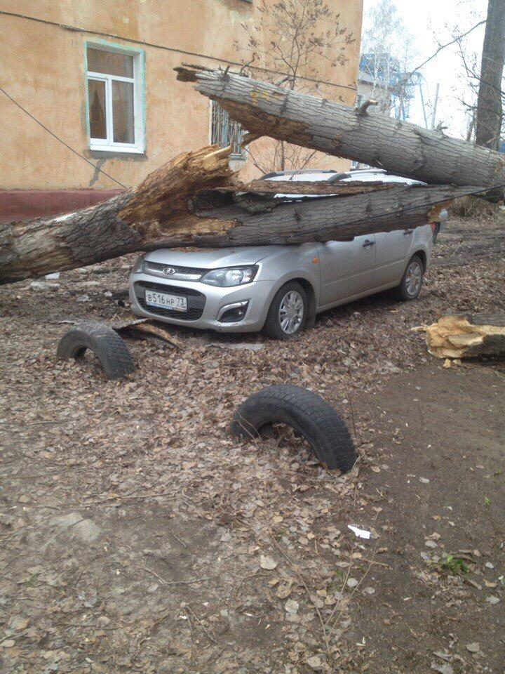 В Ульяновске об легковушки ломаются деревья. ФОТО, фото-1