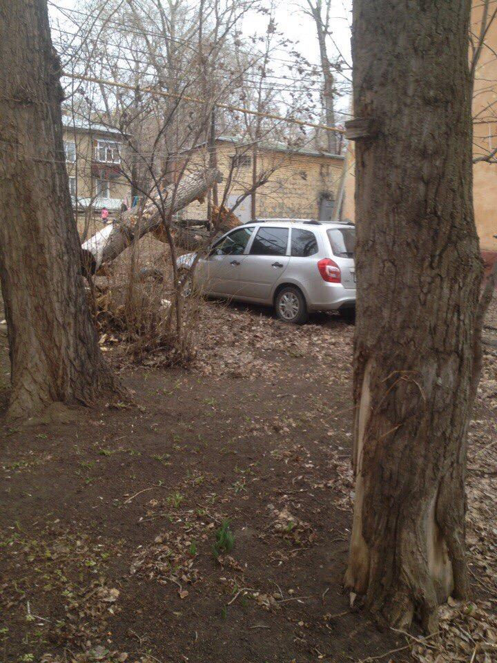 В Ульяновске об легковушки ломаются деревья. ФОТО, фото-2