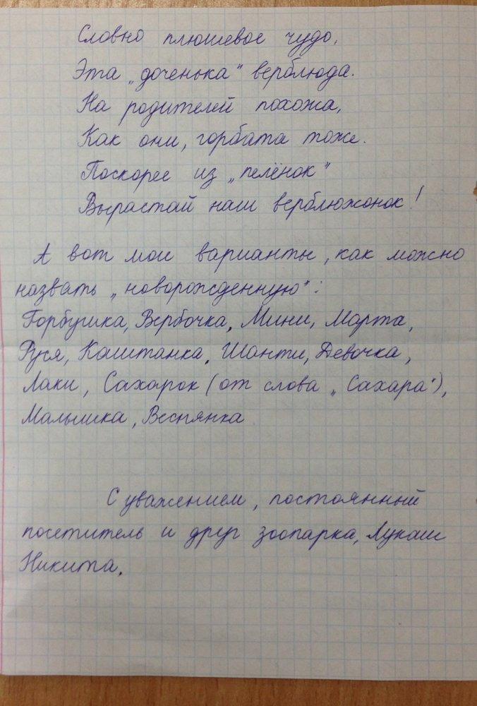 Харьковчане выбрали имя новорожденному верблюжонку (ФОТО), фото-2