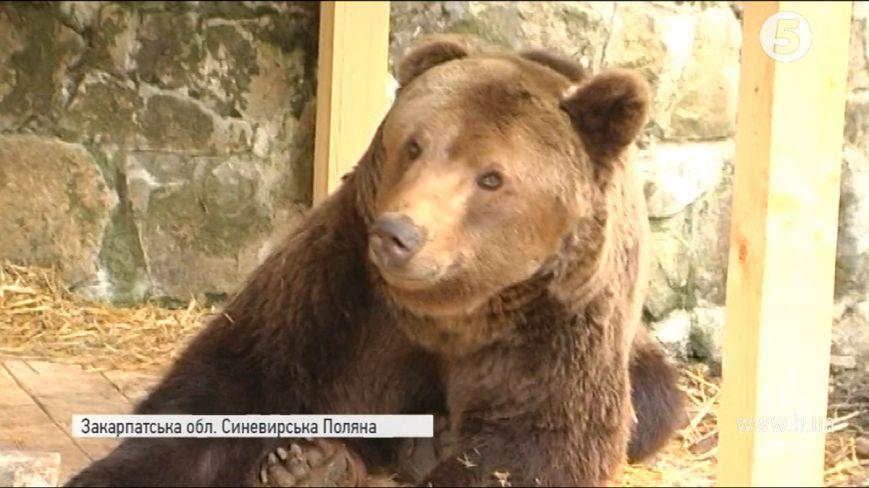 Як 17-річний цирковий ведмідь Штефан потрапив на Закарпаття: відео, фото-1
