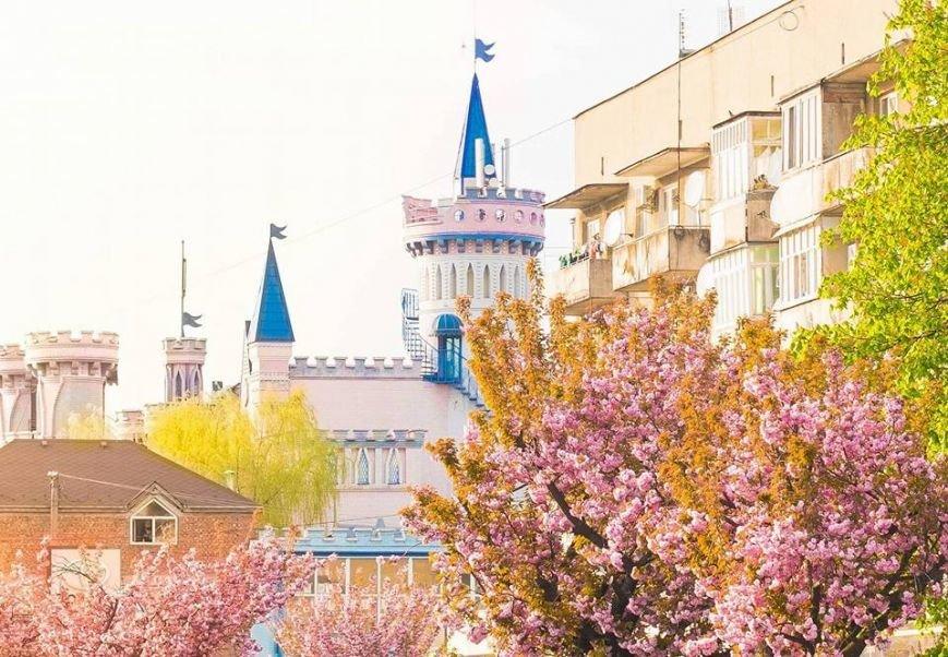 Квітучий Ужгород: у мережі опублікували чудові фото передсвяткового міста, фото-1