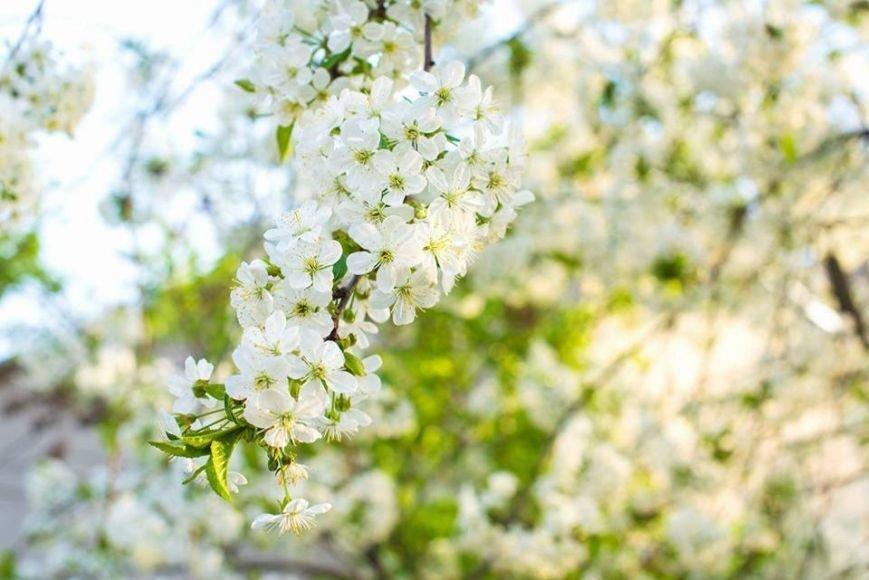 Квітучий Ужгород: у мережі опублікували чудові фото передсвяткового міста, фото-7