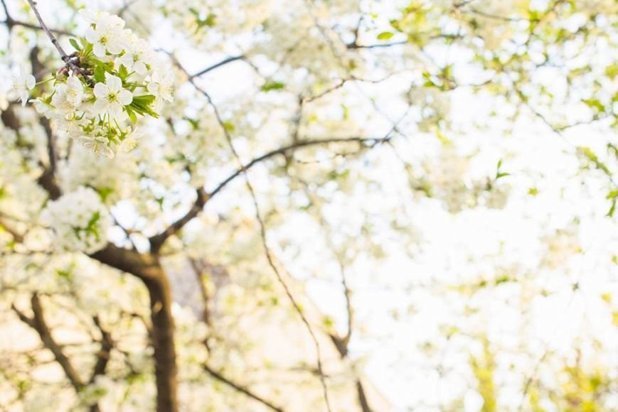 Квітучий Ужгород: у мережі опублікували чудові фото передсвяткового міста, фото-5