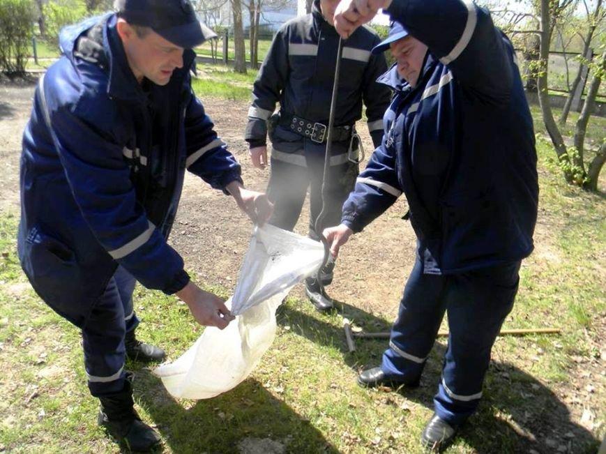 В Каховке спасатели на территории детского сада поймали змею (фото), фото-2