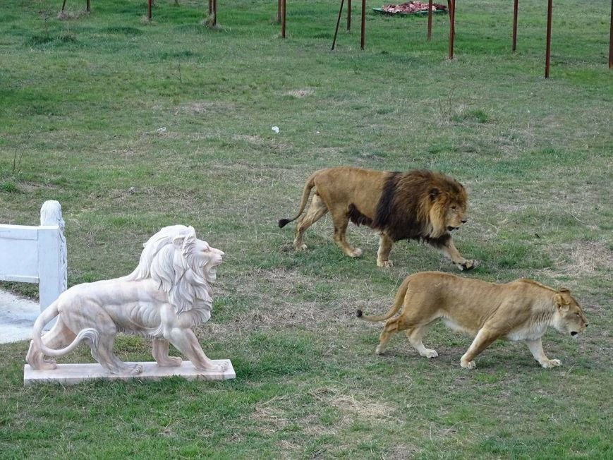 Ялтинцы побывали на открытии сезона сафари-парка «Тайган», фото-10