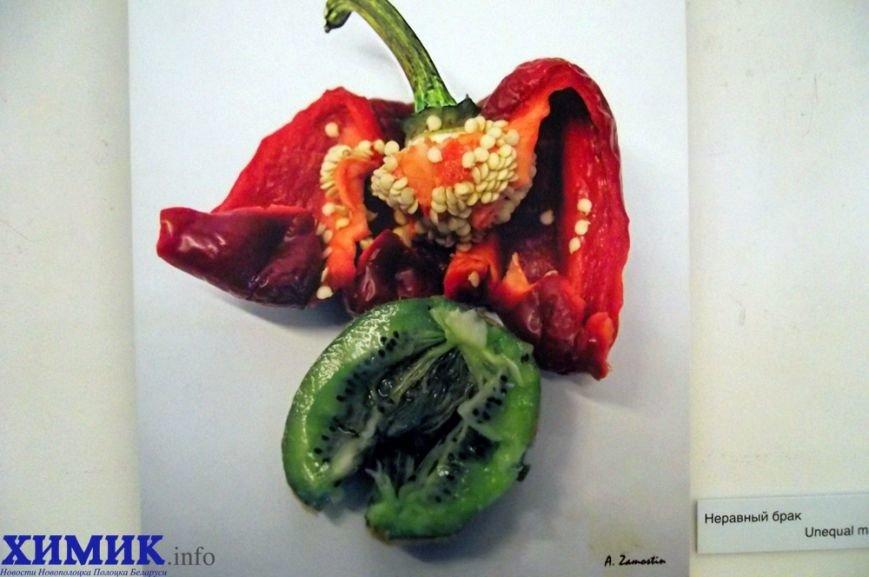В художественной галерее Полоцка открылся «Овощной базар», фото-2
