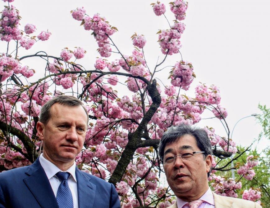 В Ужгороді на Православній набережній та проспекті Свободи дипломат із Японії посадив сакури: фоторепортаж, фото-15