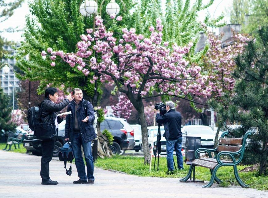 В Ужгороді на Православній набережній та проспекті Свободи дипломат із Японії посадив сакури: фоторепортаж, фото-17