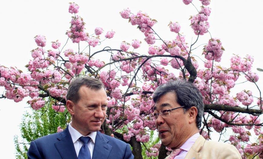 В Ужгороді на Православній набережній та проспекті Свободи дипломат із Японії посадив сакури: фоторепортаж, фото-8