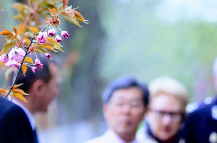 В Ужгороді на Православній набережній та проспекті Свободи дипломат із Японії посадив сакури: фоторепортаж, фото-5