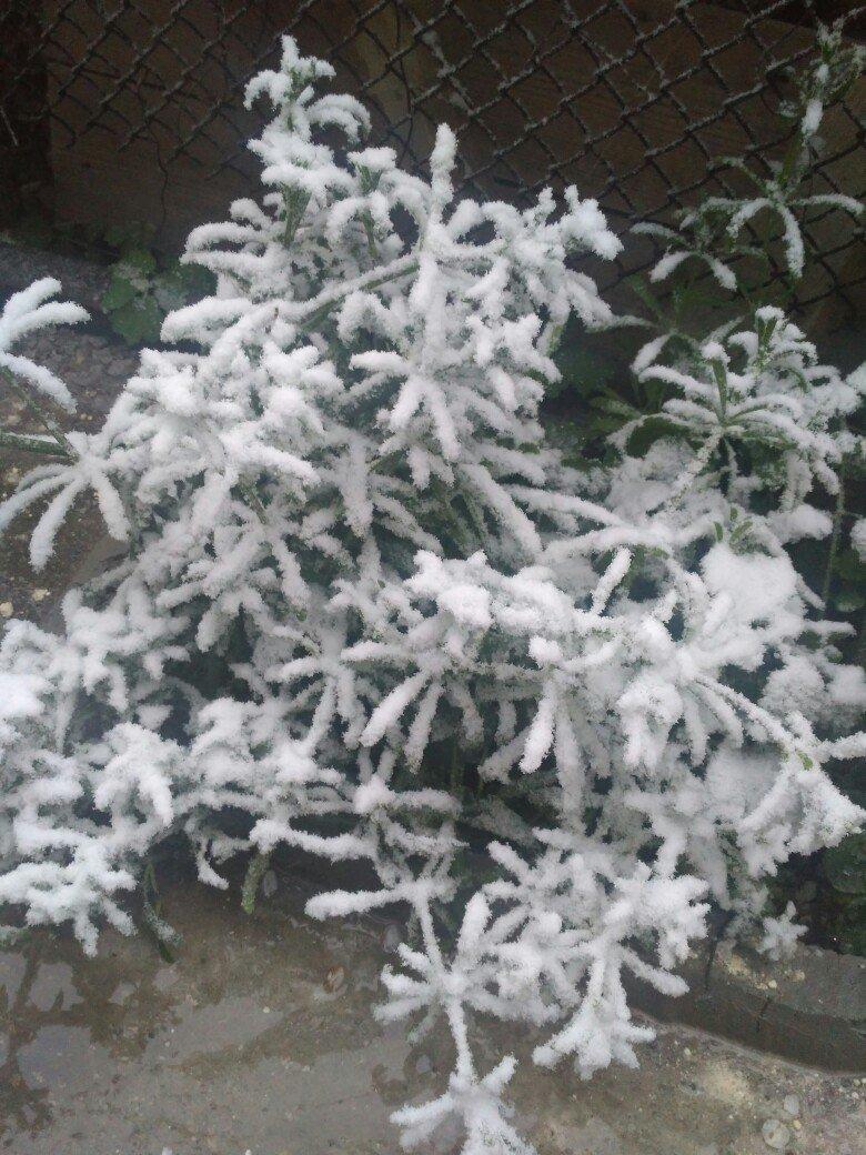 В Крым неожиданно вернулась зима: в Симферополе выпал снег (ФОТО), фото-4